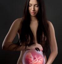 Suportul luteal in sarcina incipienta