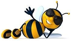 2- Muscaturile si intepaturile de insecte − cum le diferentiem si tratam 2
