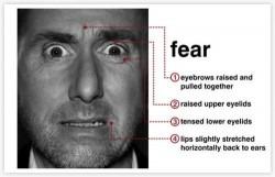 Limbajul nonverbal – Cum recunosti frica ?